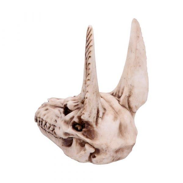 Anubis Jackal Skull 17cm