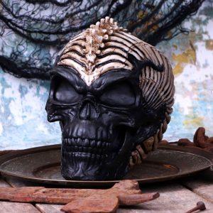 spine head skull